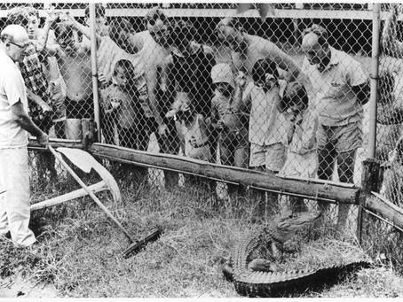 Mago Vista Amusement Park History