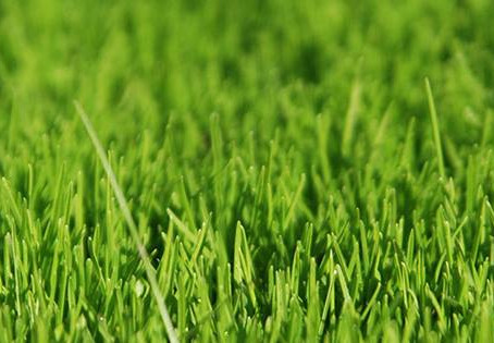 The Greatest Grass