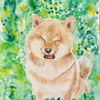 Smiling Shiba