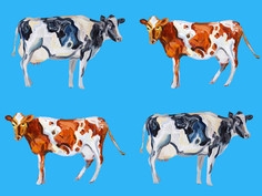 Cow Art On Blue Art Print