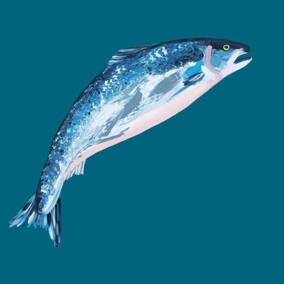 Leaping Salmon