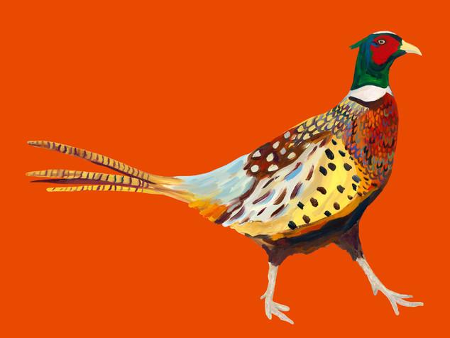 Strutting Cock on Orange