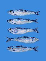 Sardines on Blue Art Print