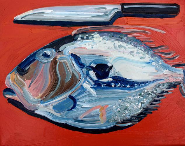 John Dory on Terracotta