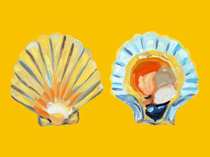 Scallops On Yellow Art Print