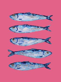 Sardines on Pink Art Prin