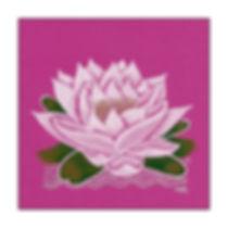 Seerose pink