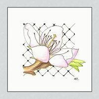Kirschblüte Tusche und Aquarellstifte 10 x 10 cm