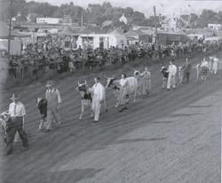 Listowel Fair History Book 1940's dairy
