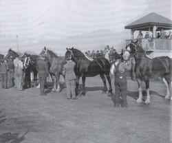 Listowel Fair History Book 1940's heavy