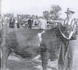 Listowel Fair - History Book - beef