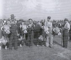 Listowel Fair History Book 1940's Herefo