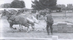 Listowel Fair - History Book - horse pul
