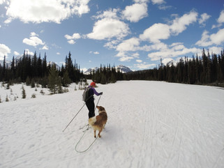5 STEPS - HOW TO START SKIJORING WITH YOUR DOG