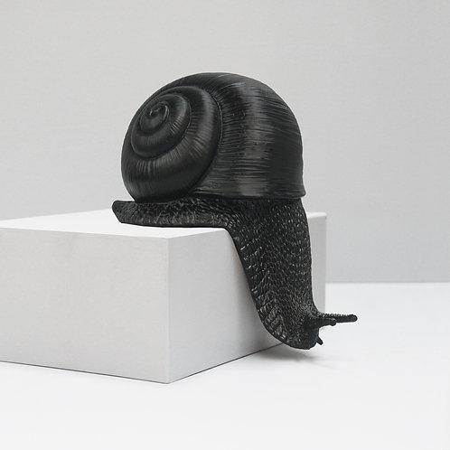 Shelf Snail Black