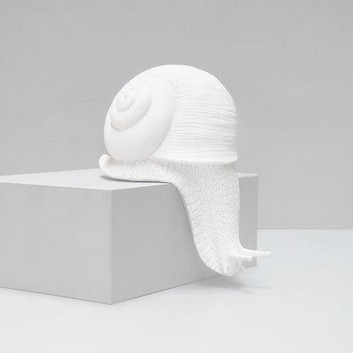 Shelf Snail White