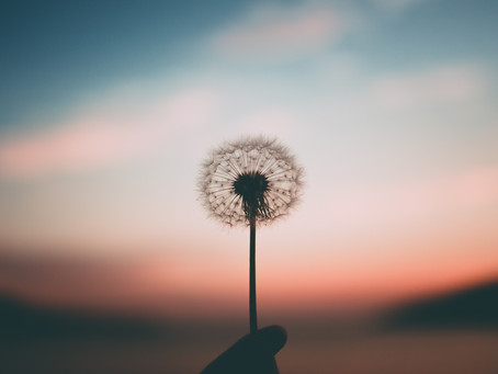 Why You Should Wish Upon a Dandelion