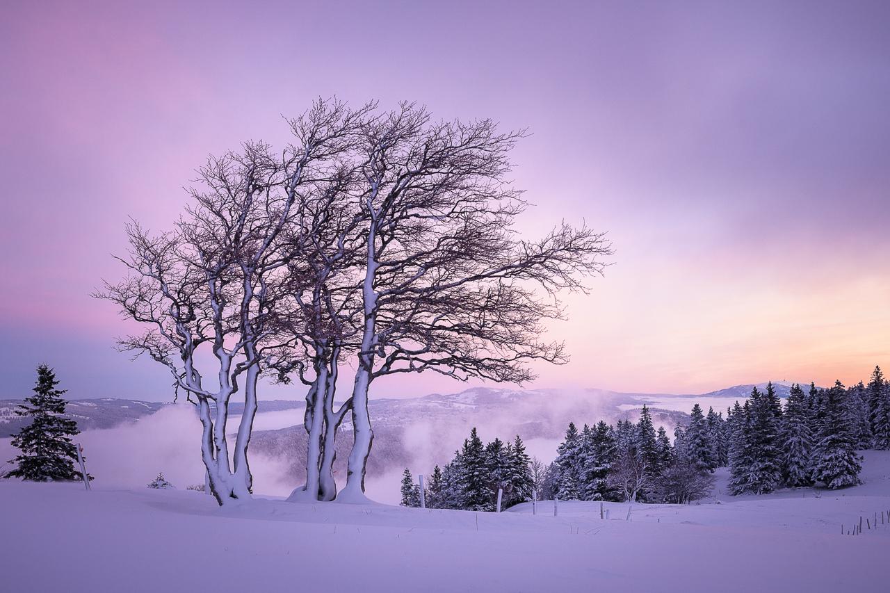 © Koni Frey Photographie