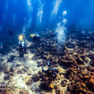 Fun Dive with Scuba Club Langkawi