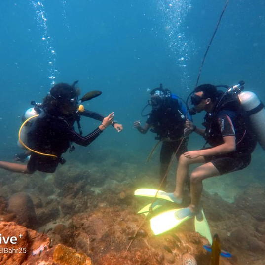 Discovery Scuba Diving (DSD)