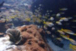 Beautiful corals and marine life at Pulau Payar Marie Park