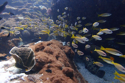 Beautiful corals and marine life at Pulau Payar Marie Park