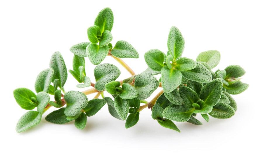 Thyme, White Essential Oil