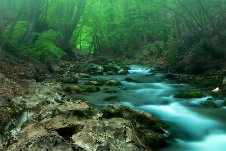 Image of stream in forest