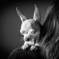 06 foto-gossos-celine-pech-andorra-0160