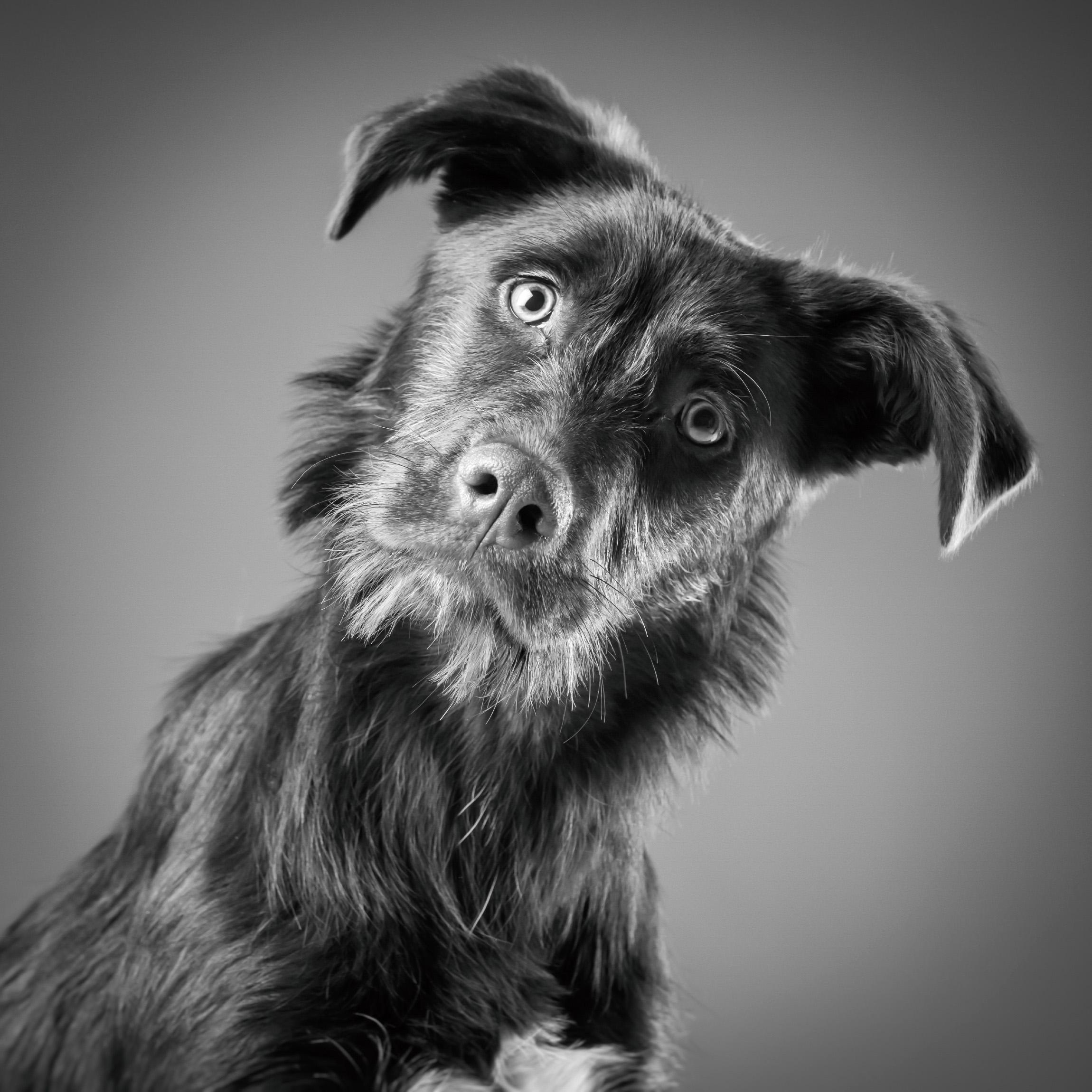 06 foto-gossos-celine-pech-andorra-0149