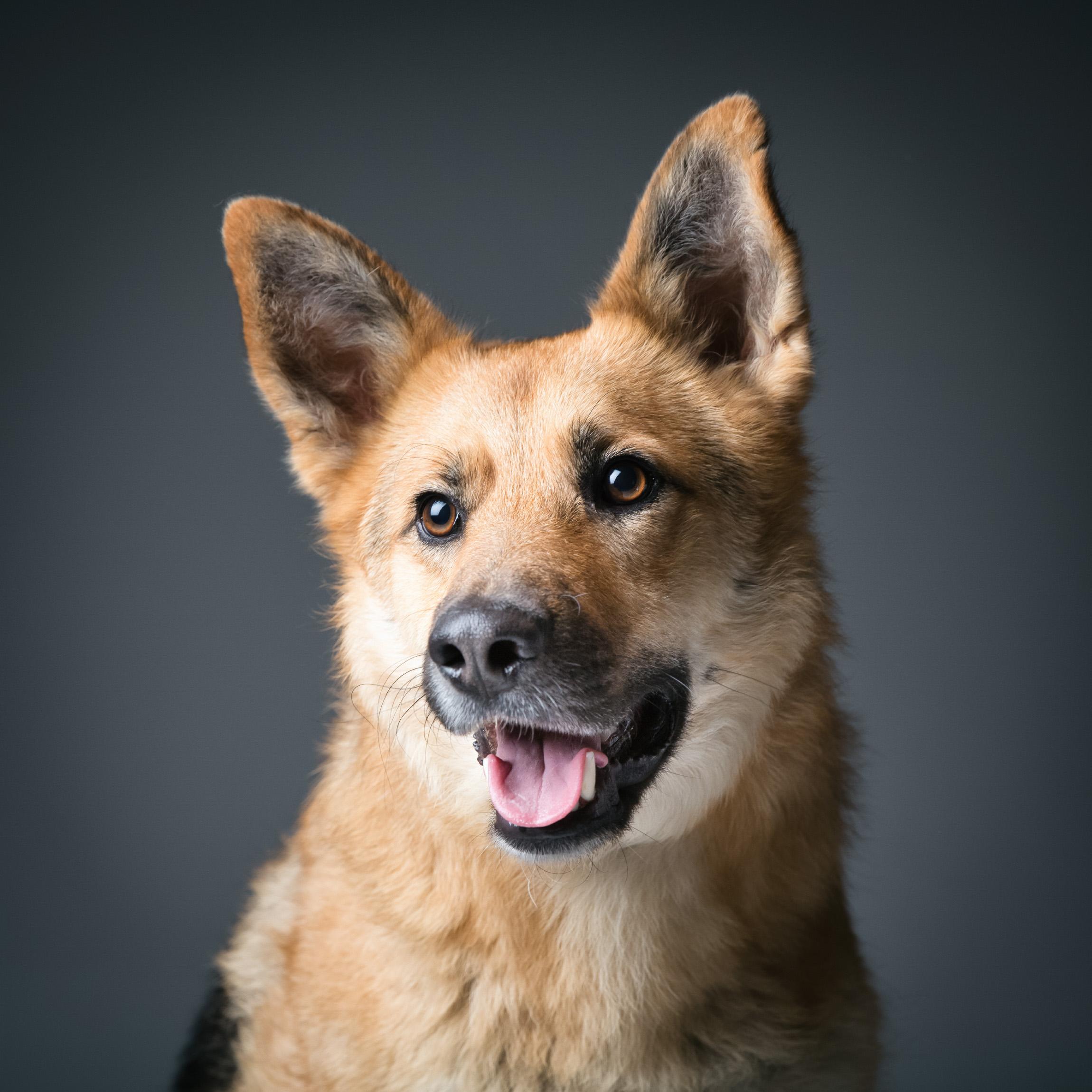 06 foto-gossos-celine-pech-andorra-0142