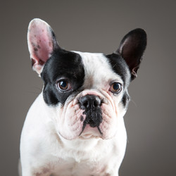 06 foto-gossos-celine-pech-andorra-0141