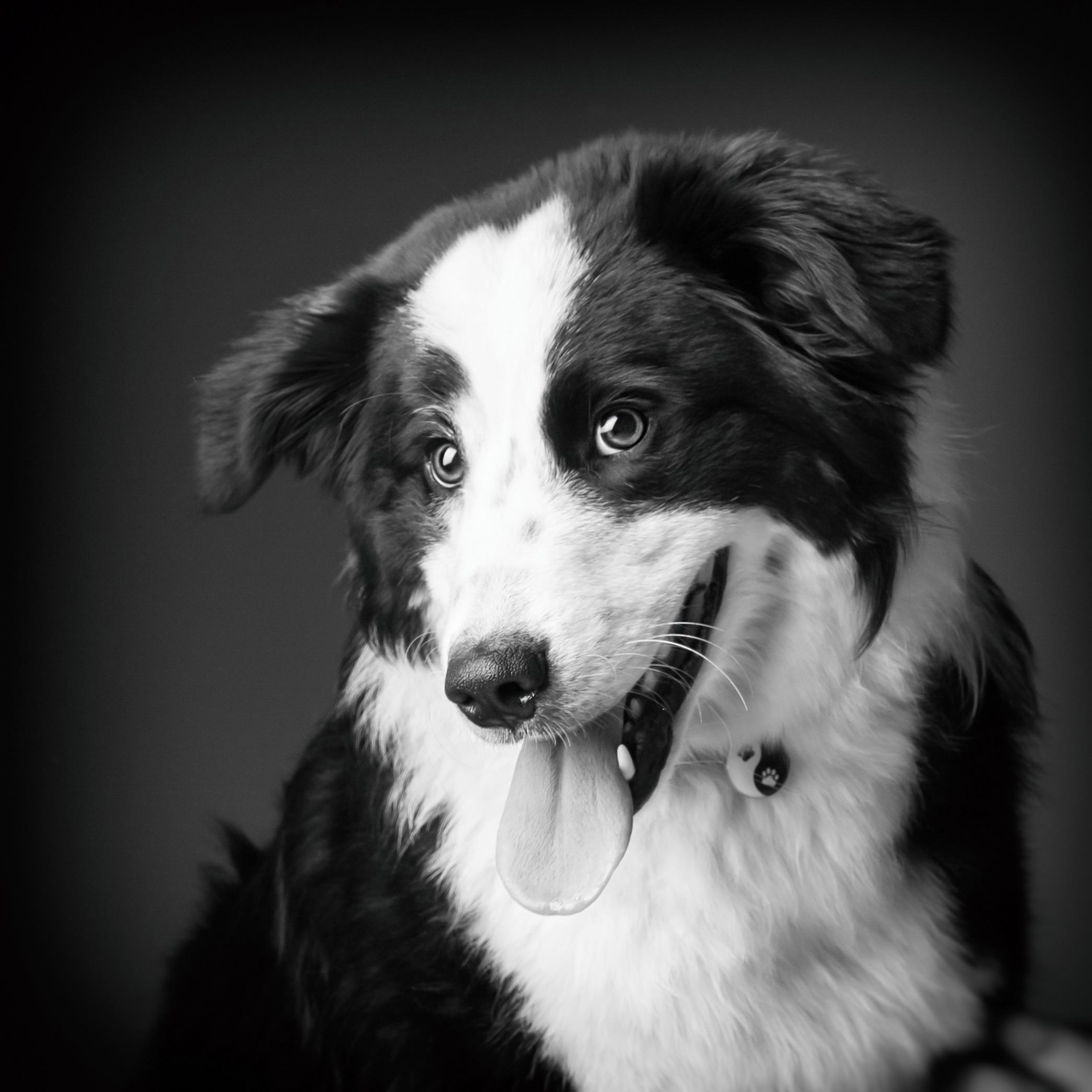 06 foto-gossos-celine-pech-andorra-0135