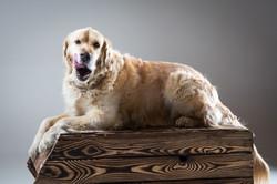 06 foto-gossos-celine-pech-andorra-0134