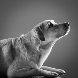 06 foto-gossos-celine-pech-andorra-0147
