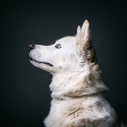 06 foto-gossos-celine-pech-andorra-0145