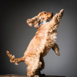 06 foto-gossos-celine-pech-andorra-0140