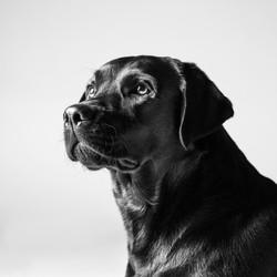 06 foto-gossos-celine-pech-andorra-0137