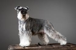 06 foto-gossos-celine-pech-andorra-0155
