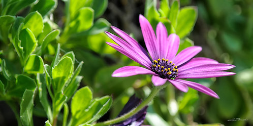 Fleur 8272