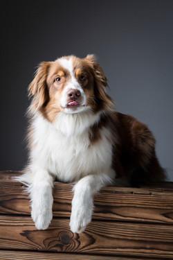 06 foto-gossos-celine-pech-andorra-0132