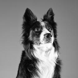 06 foto-gossos-celine-pech-andorra-0156