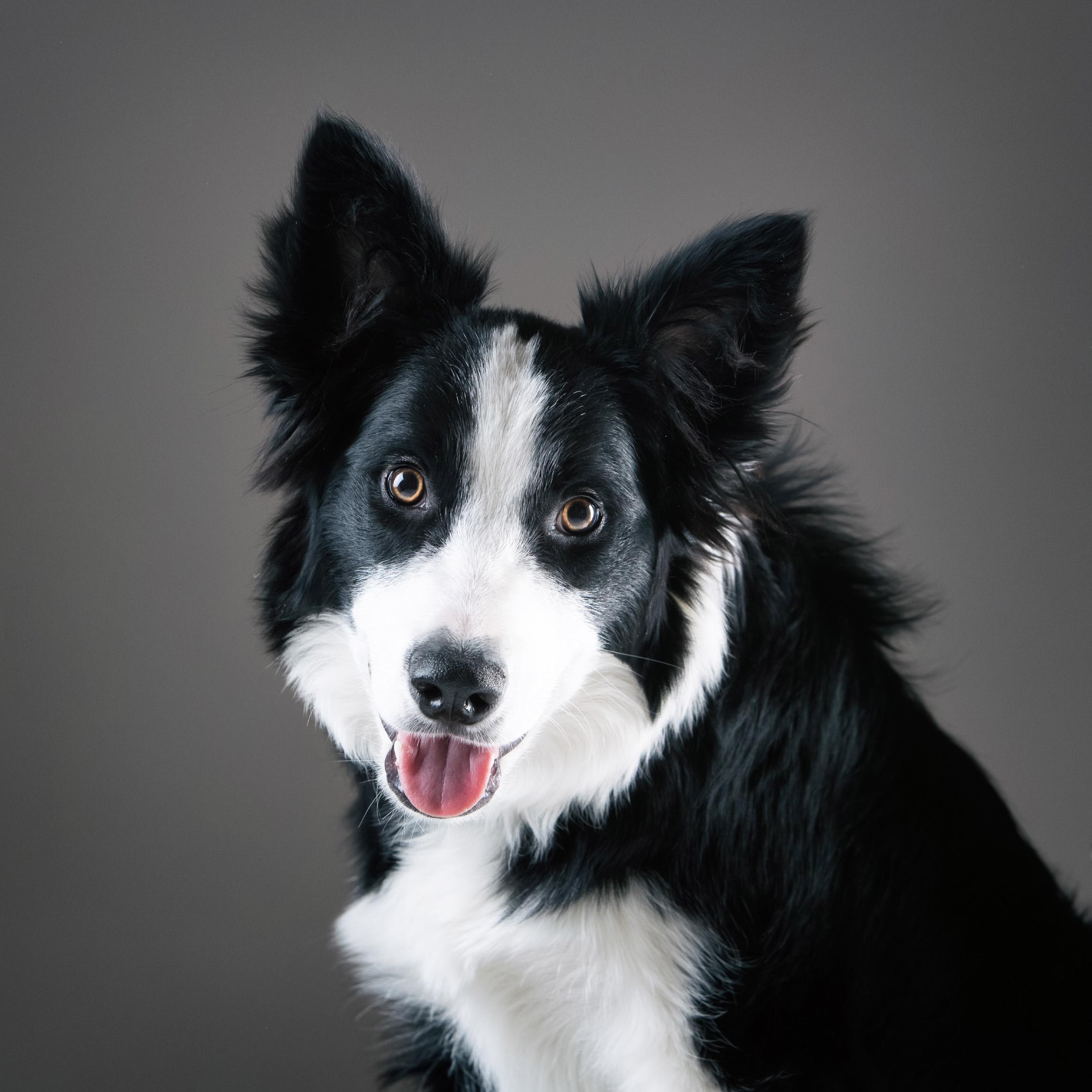 06 foto-gossos-celine-pech-andorra-0159