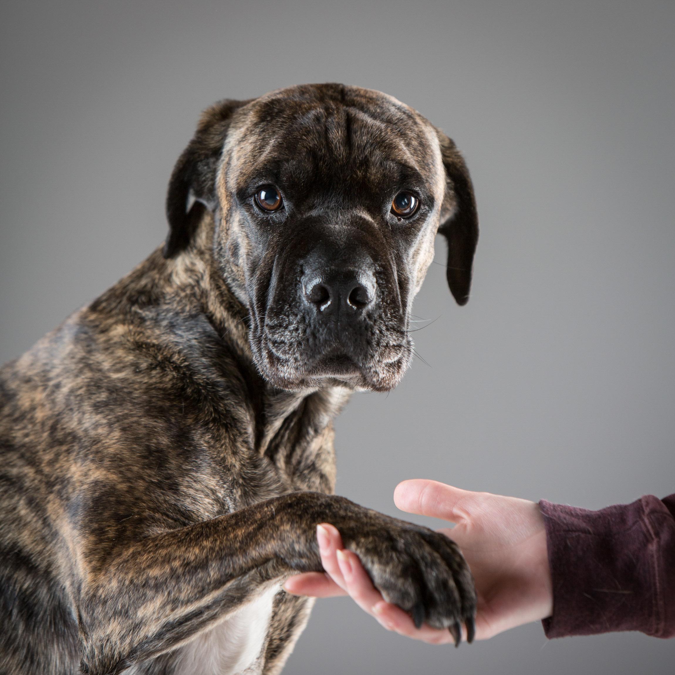 06 foto-gossos-celine-pech-andorra-0151