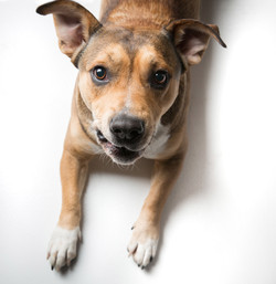 06 foto-gossos-celine-pech-andorra-0157