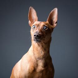 06 foto-gossos-celine-pech-andorra-0131