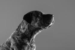 06 foto-gossos-celine-pech-andorra-0150
