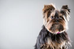 06 foto-gossos-celine-pech-andorra-0139