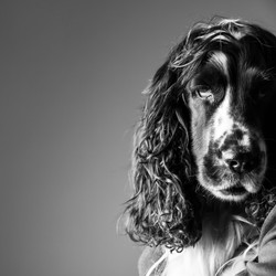 06 foto-gossos-celine-pech-andorra-0154