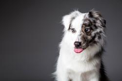 06 foto-gossos-celine-pech-andorra-0158